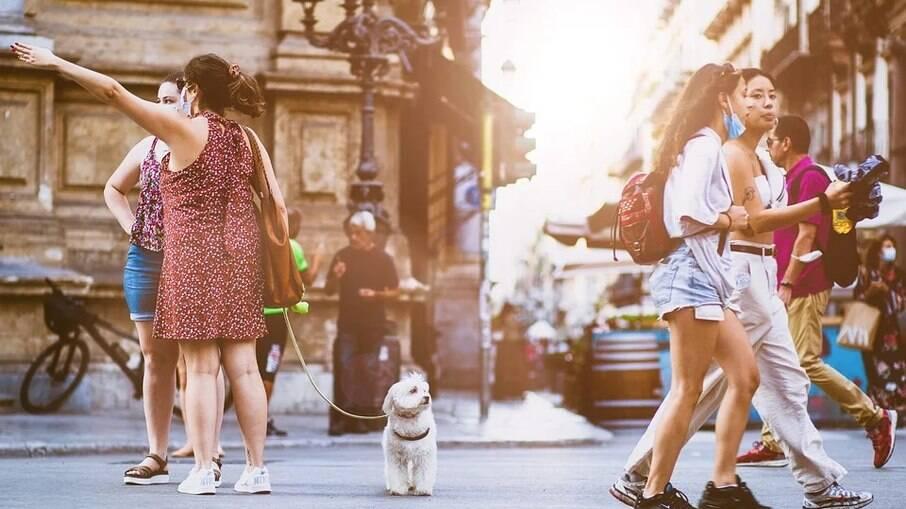 Quando estiver passeando com o cachorro, tenha a atenção sempre voltada para o pet