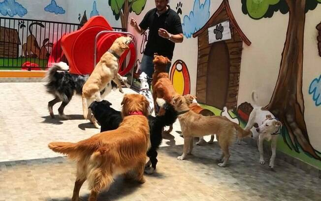 Spa para cães oferece tudo para o animal de estimação