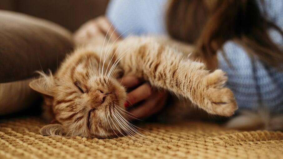 Músicas com melodias suaves deixam os gatos mais relaxados