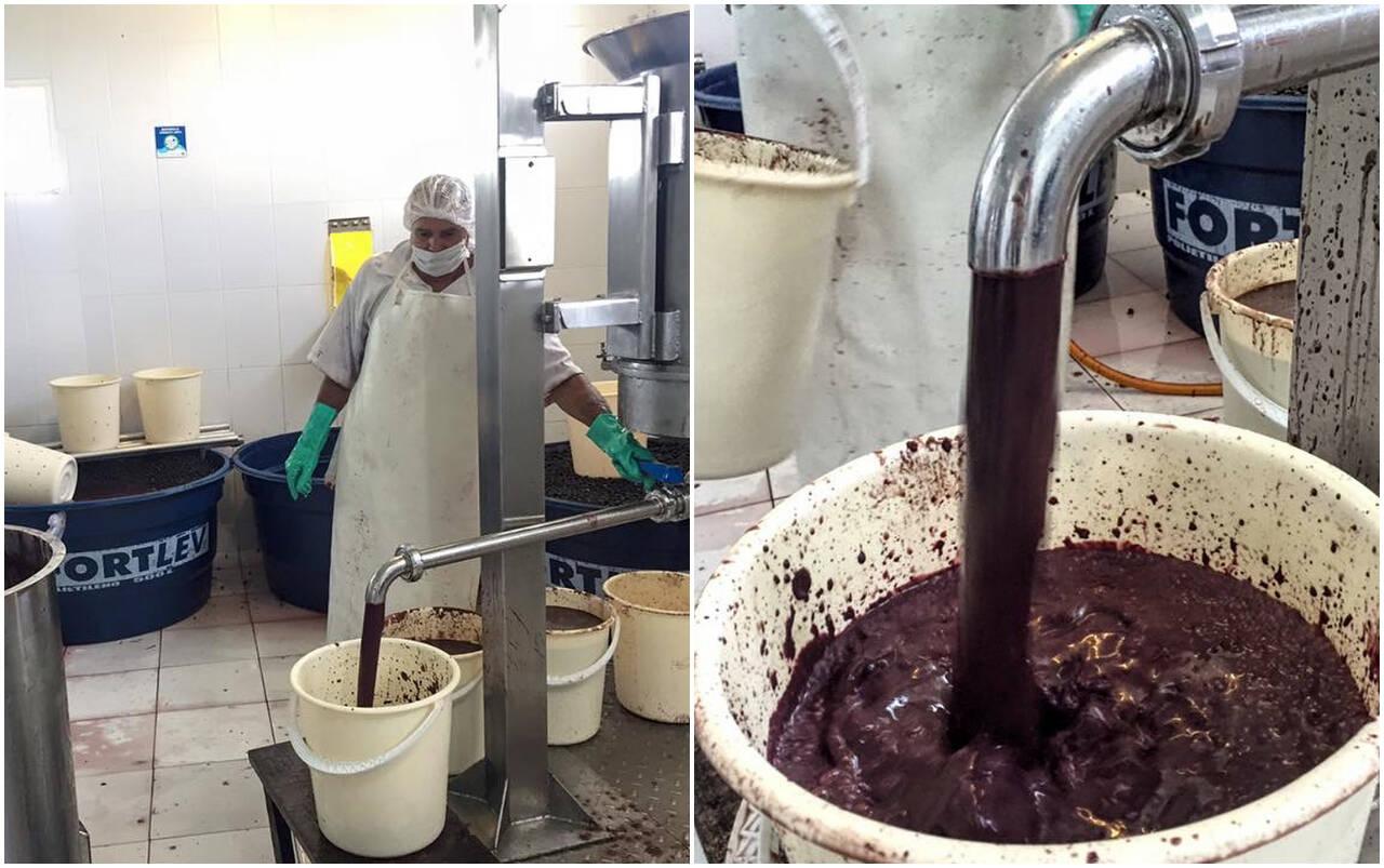 Na fábrica, a fruta é colocada na despolpadeira, onde polpa e semente serão separadas. Foto: Instagram/Fazenda Bom Sossego