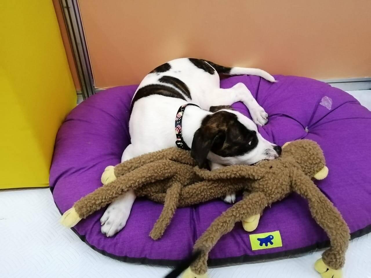 Cães disponíveis para adoção no stand da Apaa. Foto: Jade Lourenção/ Portal IG