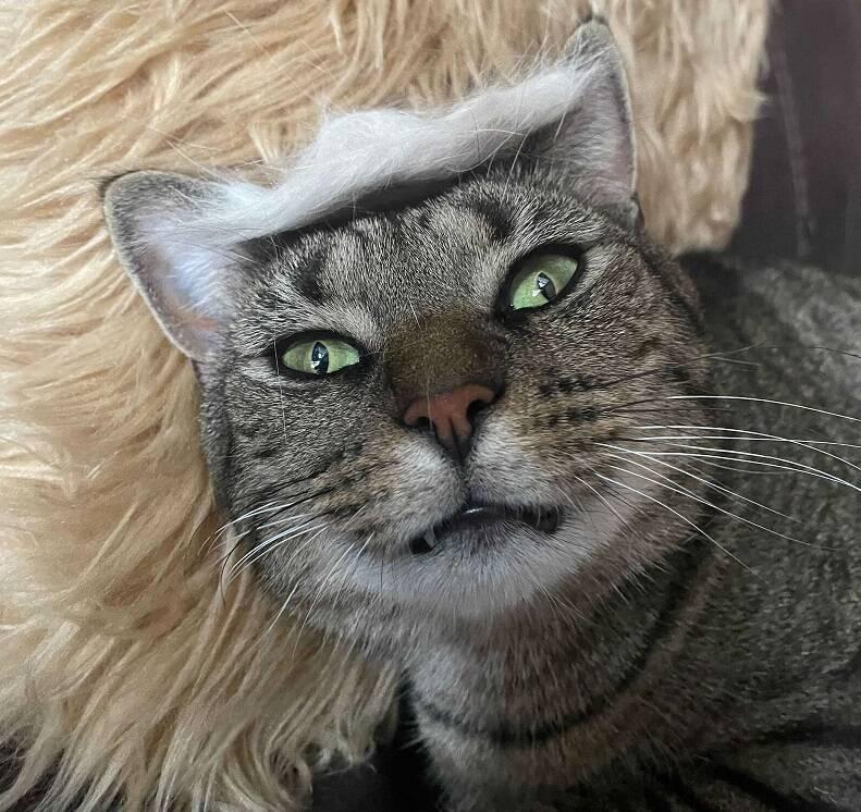 Spike usando o chapéu feito com os pelos da irmã, não parece muito animado. Foto: Taylor Nelson