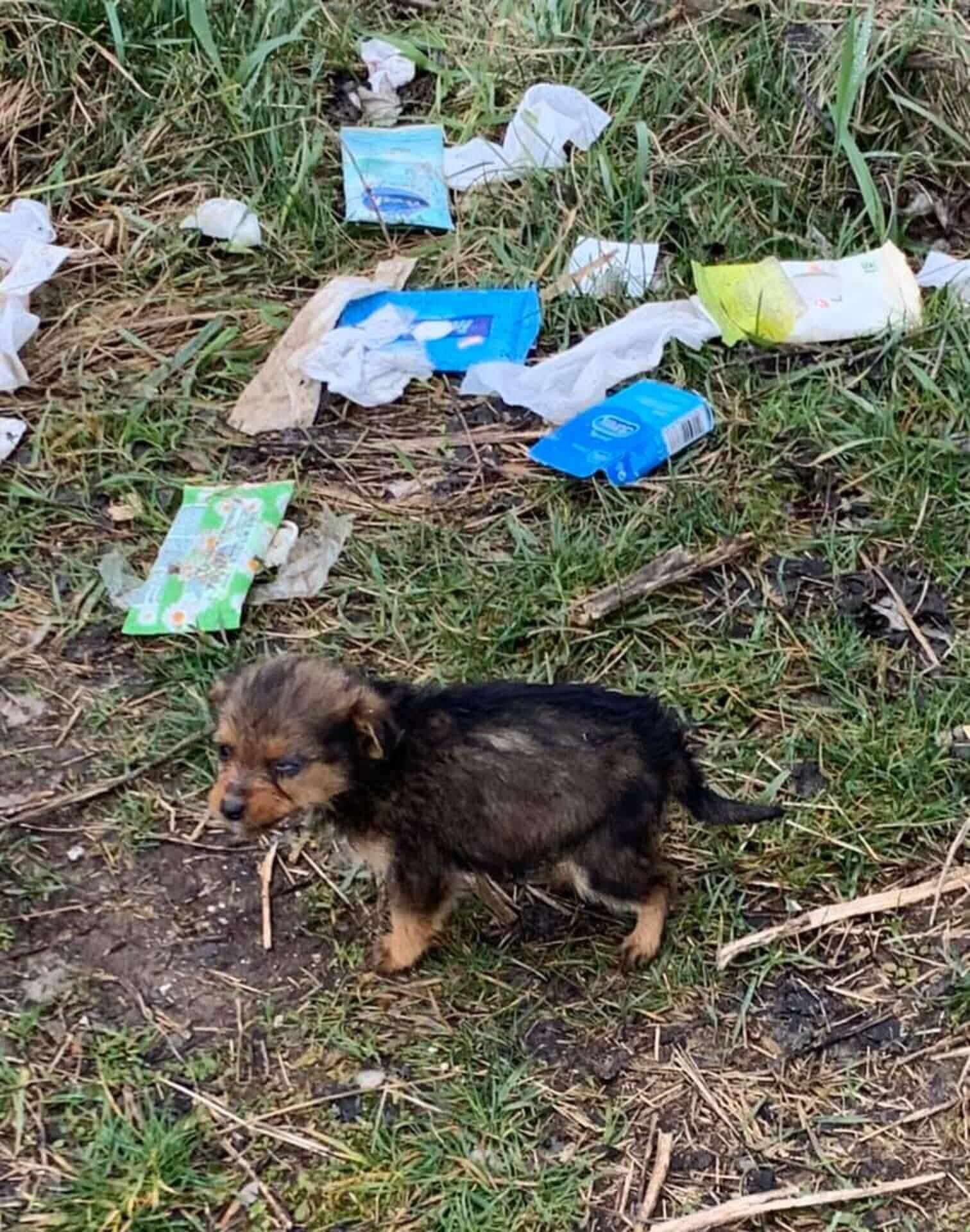 Coco foi encontrada chorando ao lado de uma pilha de lixo. Foto: Goran Marinkovic/Arquivo Pessoal