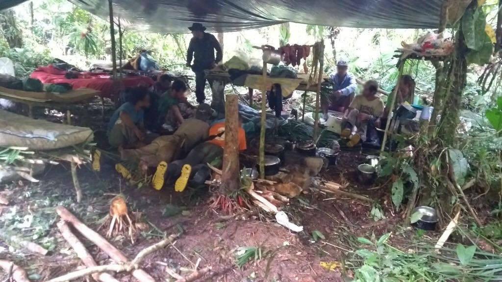 Equipes do Policiamento ambiental prende quadrilha de palmiteiros . Foto: Divulgação/Polícia Militar Ambiental