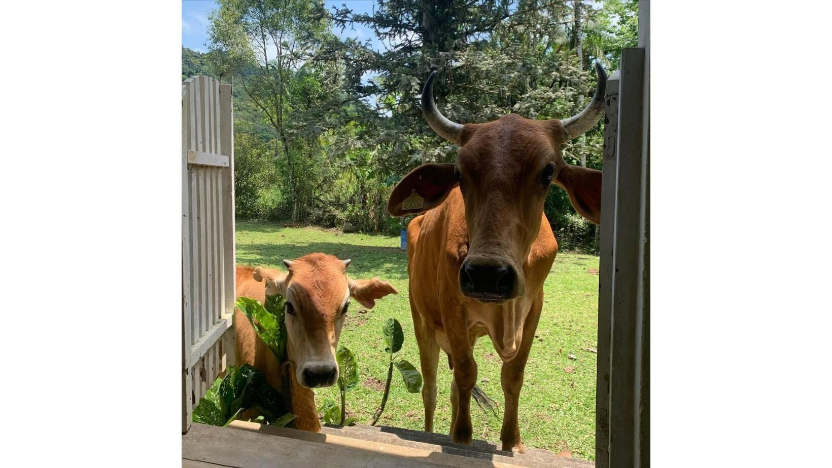 Beth e Alba bolando um plano para entrar em casa. Foto: Reprodução/Instagram @vaquinhabeth