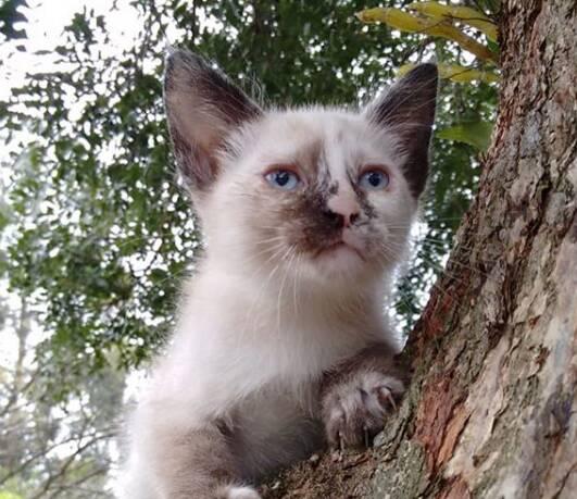 Anastácia é uma gatinha que aguarda ansiosamente por uma família. Foto: Divulgação