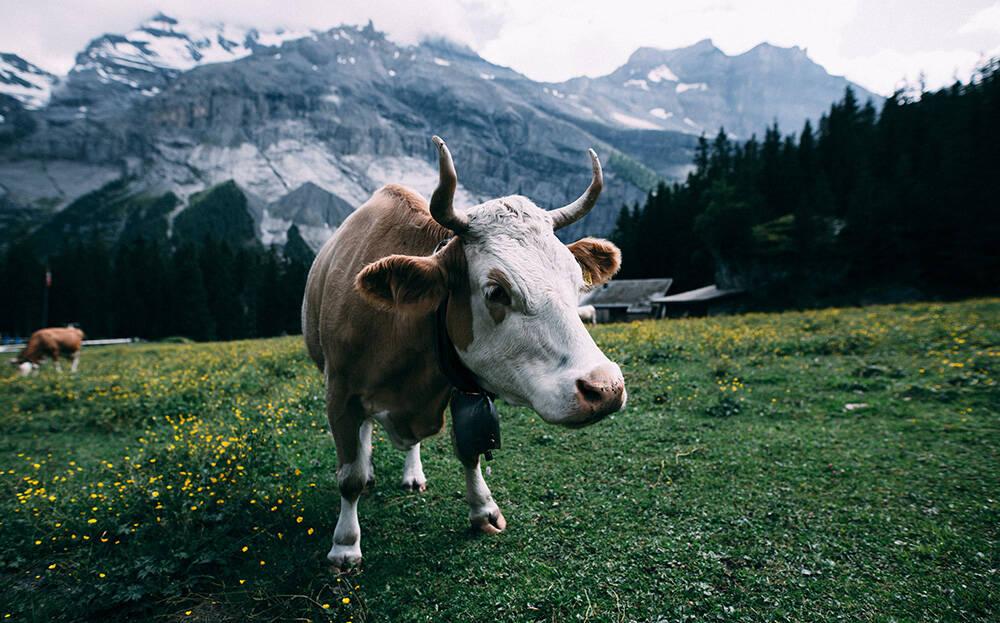 Os alpes suíços são uma das principais atrações de Bern, na Suíça. Foto: Heiner/Pexels