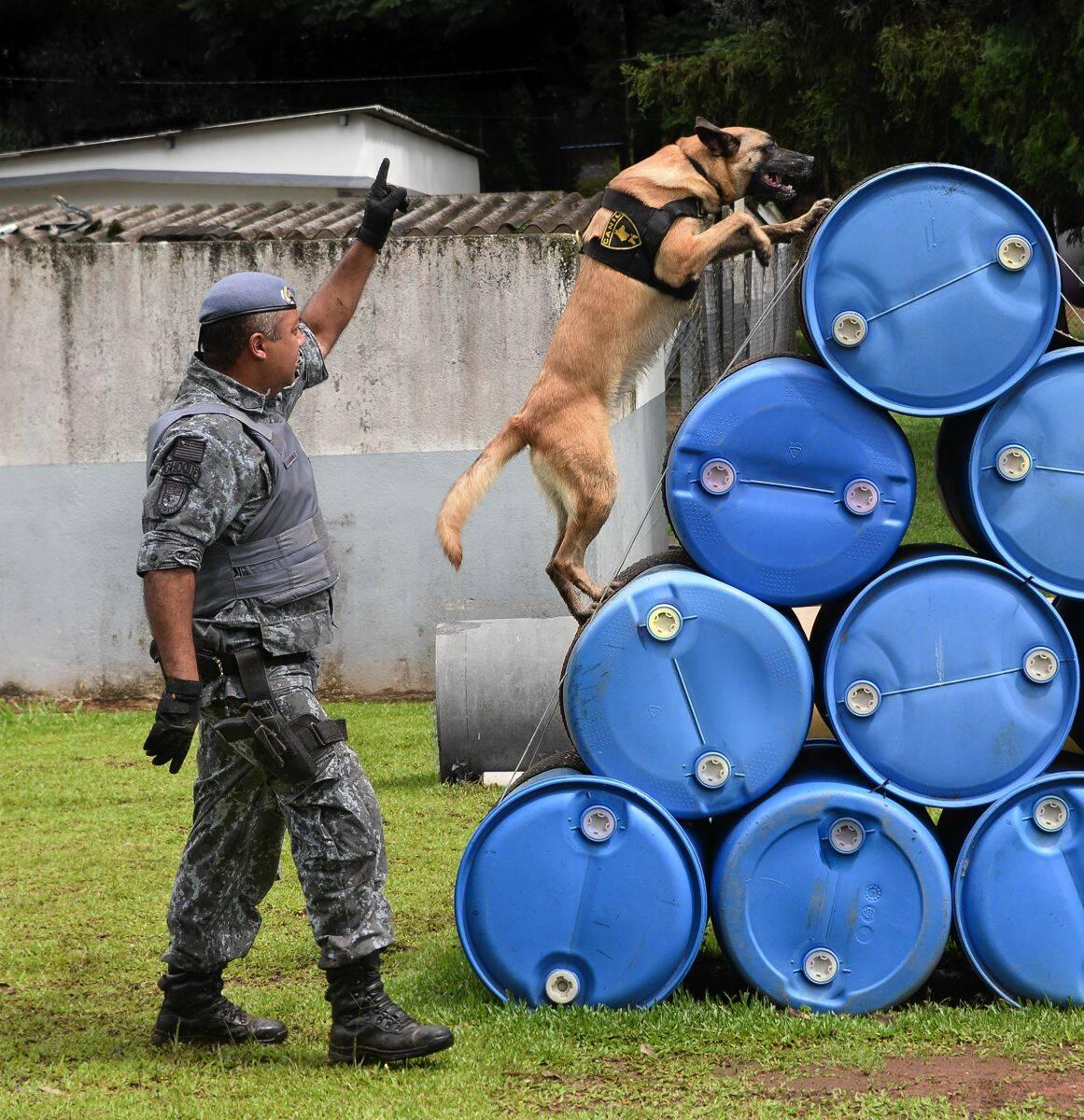 Canil Central da Polícia Militar do Estado de São Paulo. Foto: Major PM Luis Augusto Pacheco Ambar