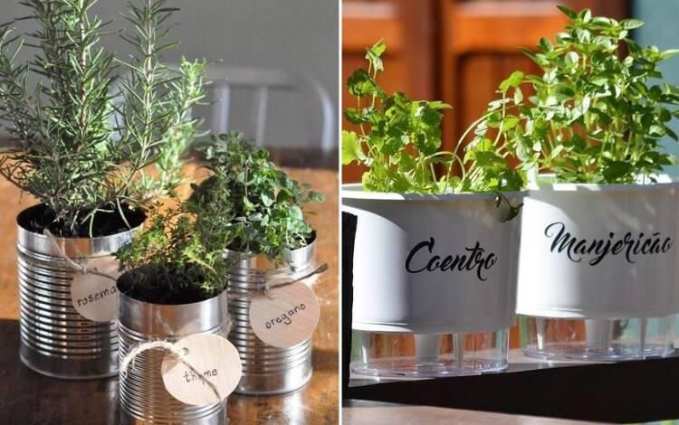 Micro plantas cultivadas em áreas internas  Cultive suas próprias ervas e saladas durante todo o ano na sua cozinha. Foto: Reprodução/Pinterest