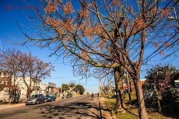 Rua de Montevidéu. Foto: Reprodução. Foto: Reprodução