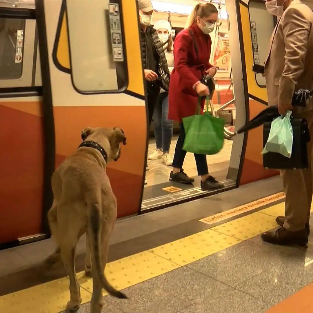 Boji educadamente espera que as pessoas saiam para que ele possa embarcar no trem. Foto: Reprodução/Instagram/boji_ist