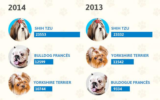 As raças de cachorro mais populares dos anos 2014 e 2013. Foto: Shayene Mazzoti/ Portal IG