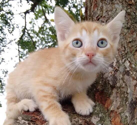 Caramelo é um gatinho macho que precisa de um lar. Foto: Divulgação