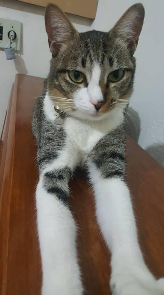 A Pitoca é uma felina resgatada das ruas. Ela é muito amada e amorosa também . Foto: Carla Ionara