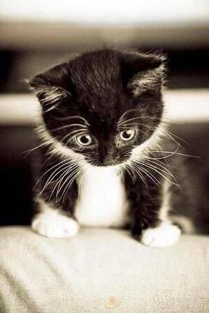 Animais mais fofos segundo o pinteres. Foto: Pinterest