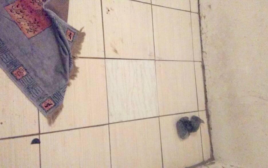 ROTA - Ao afastar o tapete, Policiais Militares identificam peça de cerâmica mais clara. Foto: ROTA / Divulgação