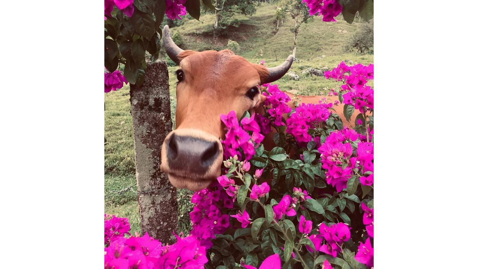 Beth em meio as flores. Foto: Reprodução/Instagram @vaquinhabeth