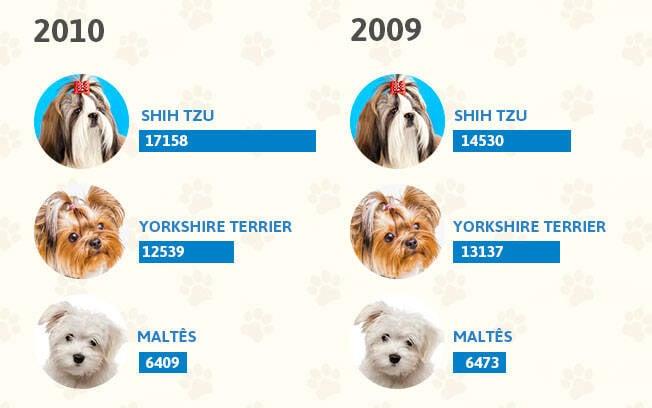 As raças de cachorro mais populares dos anos 2010 e 2009. Foto: Shayene Mazzoti/ Portal IG