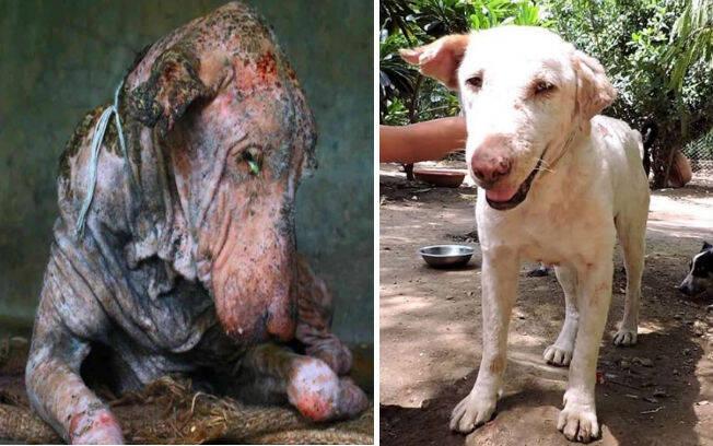 O antes e depois dos animais adotados é surpreendente . Foto: Reprodução