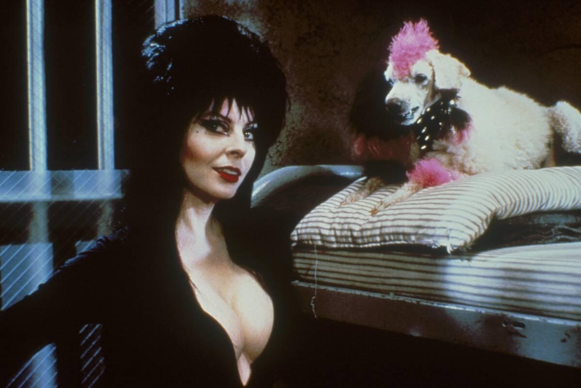 Elvira herda a mansão de uma tia falecida e seu cachorrinho, chamado Gunk. Foto: Reprodução