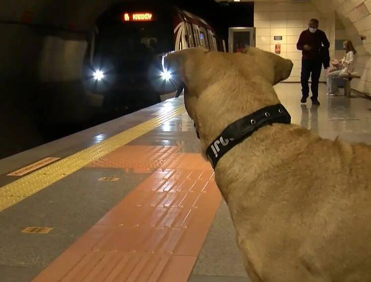 Boji aguarda que o trem que chegue para que ela vá para seu destino. Foto: Reprodução/Instagram/boji_ist