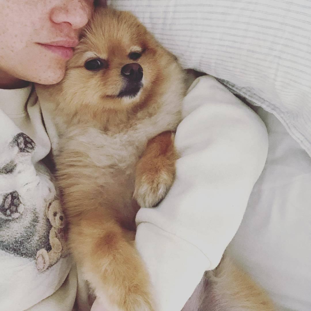 Cookie, o pet da Karol Pinheiro! . Foto: Instagram/karolpinheiro