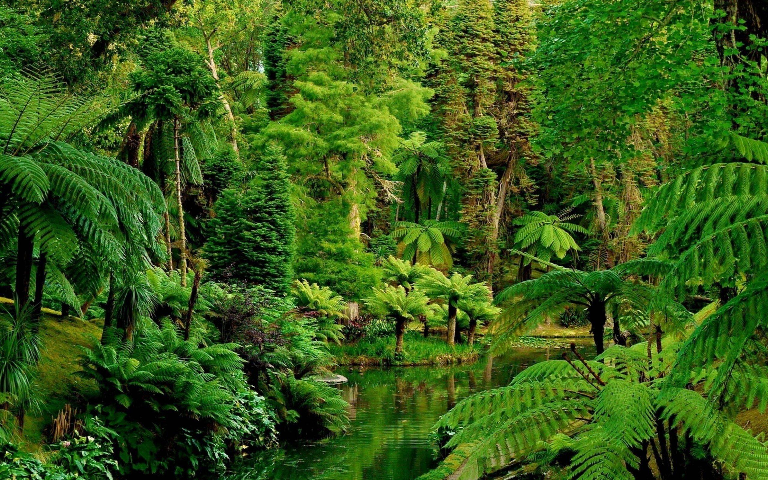 Equipe fez gravações na Floresta Amazônica. Foto: Reprodução
