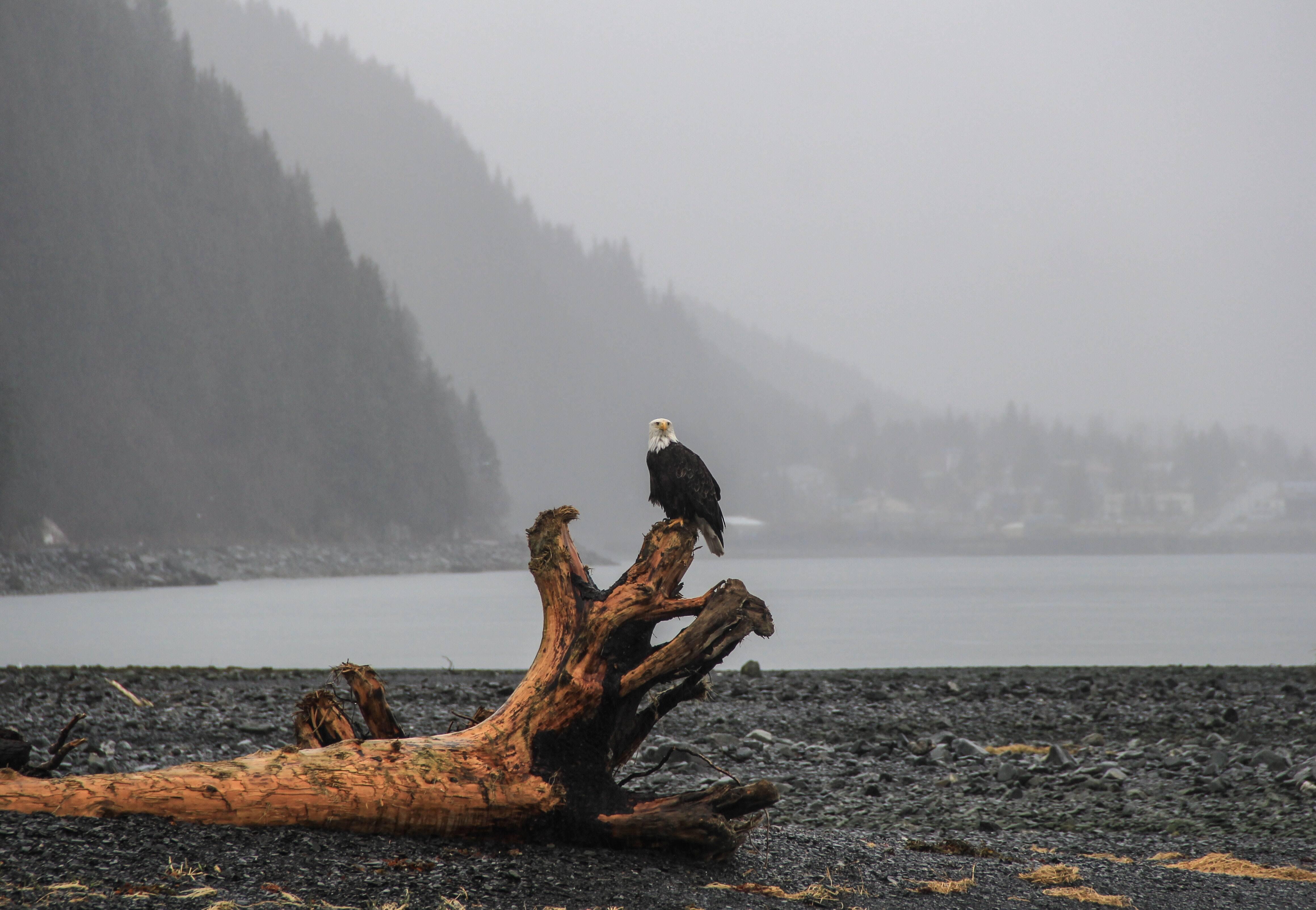 O Alasca é um dos 50 estados dos Estados Unidos, mas faz fronteira apenas com o Canadá. Foto: Pexels