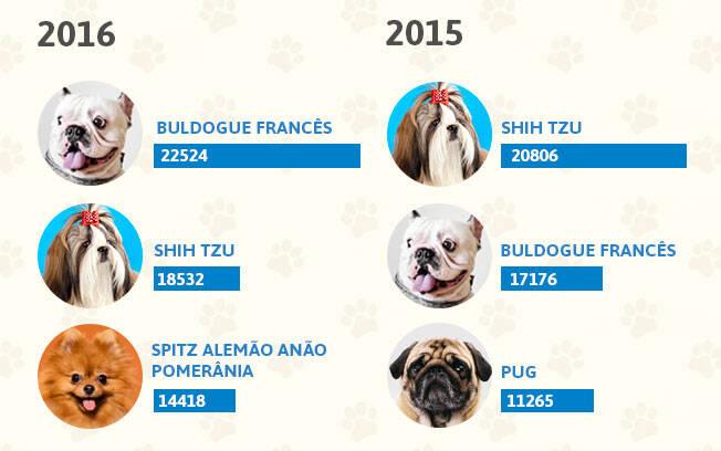 As raças de cachorro mais populares dos anos 2016 e 2015. Foto: Shayene Mazzoti/ Portal IG