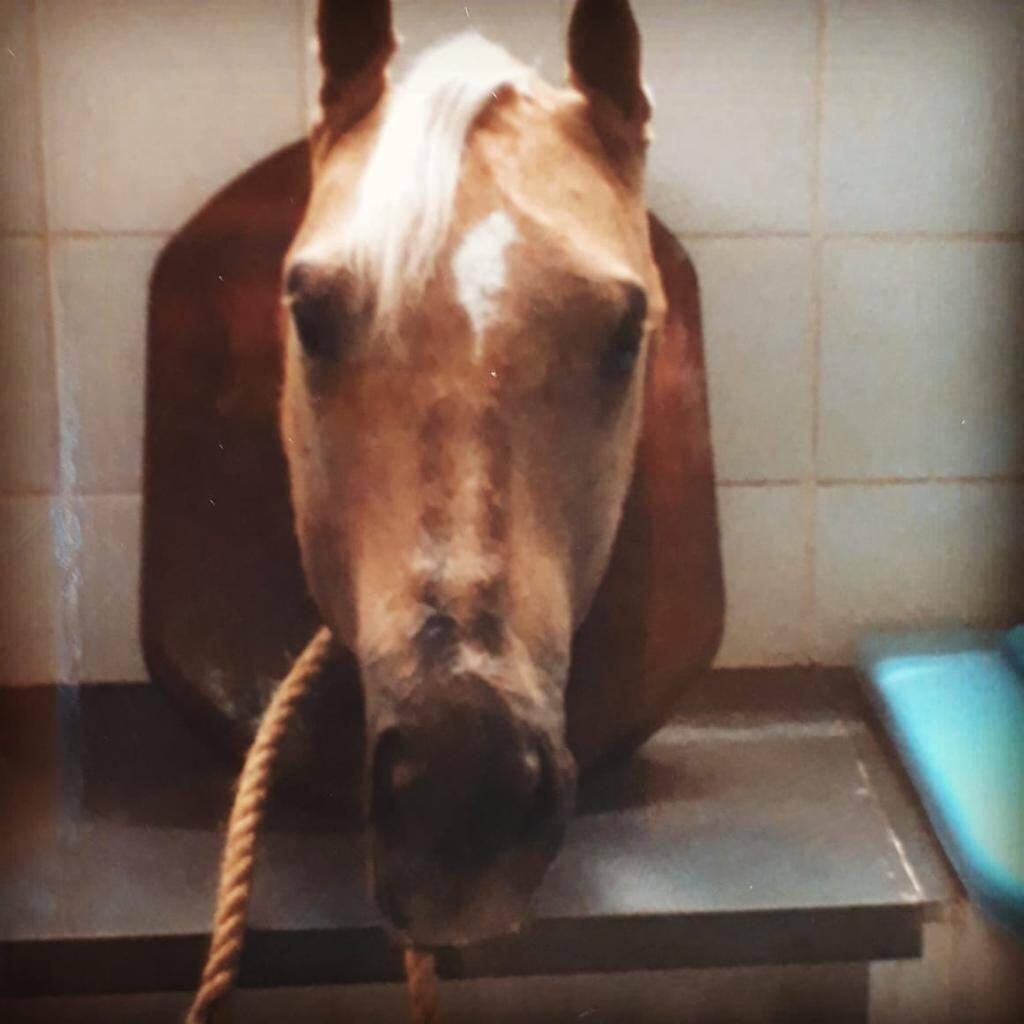 O cavalo que continua presente na vida de seus antigos donos. Foto: Reprodução/SOS Animal