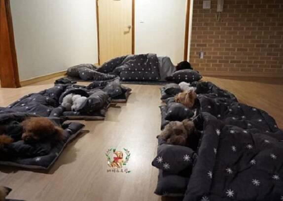 Filhotes de cachorro dormindo na creche. Foto: Reprodução Instagram
