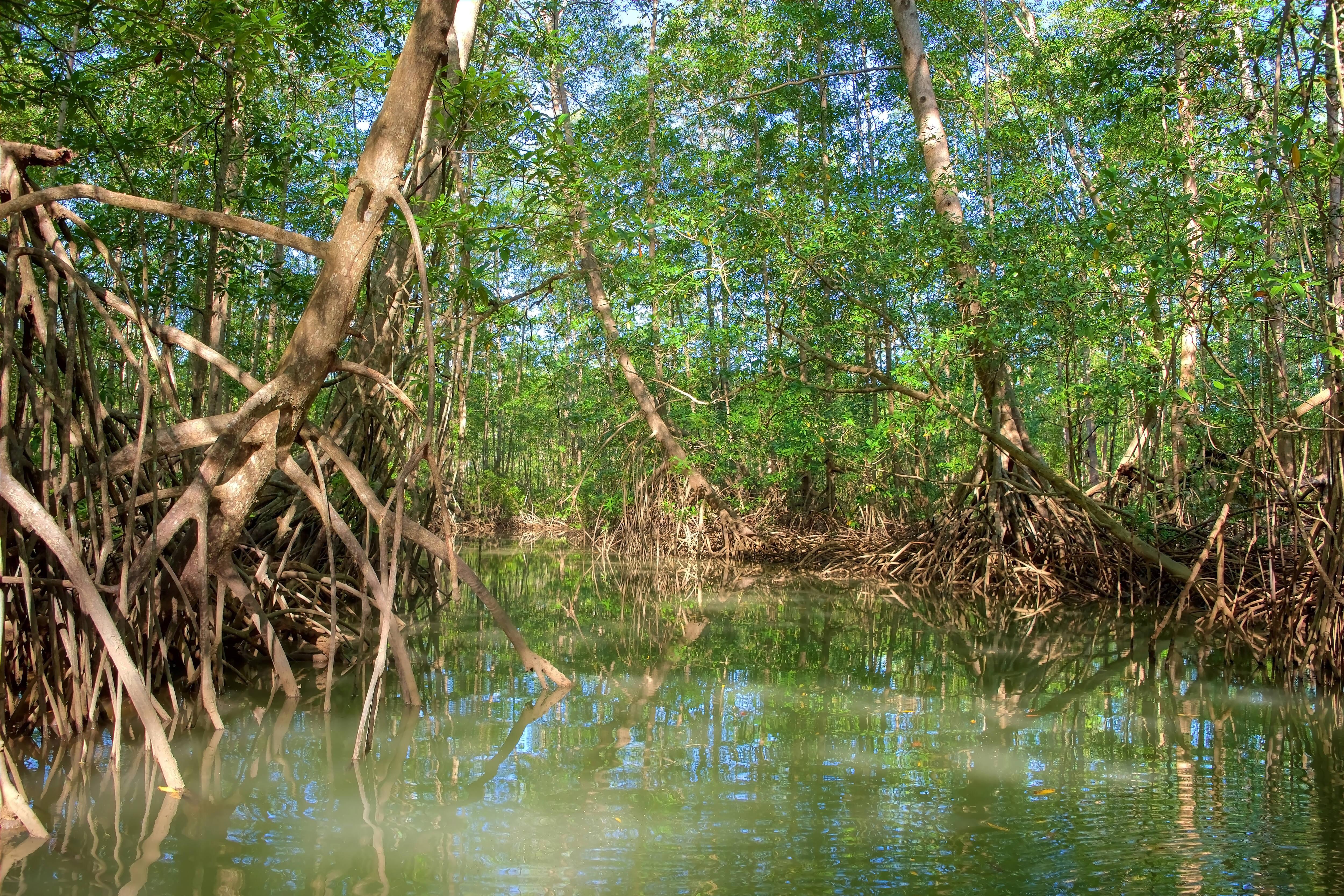 Os manguezais são parte integral da biodiversidade costarriquenha, e abrigam as mais variadas espécies. Foto: shutterstock