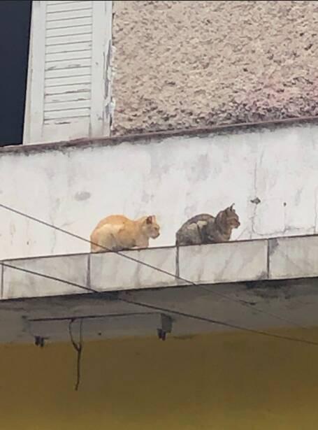 Mombasa, Naivasha e Kilifi estavam abandonados desde que nasceram em telhado e marquise de loja. Foto: Acervo pessoal