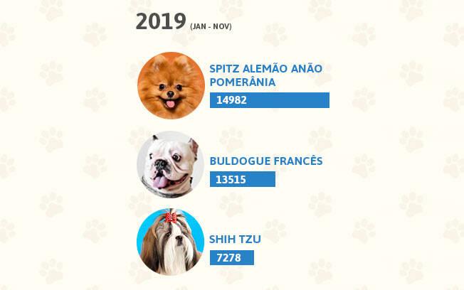 Raças de cachorro mais populares de 2019. Foto: Shayene Mazzoti/ Portal IG