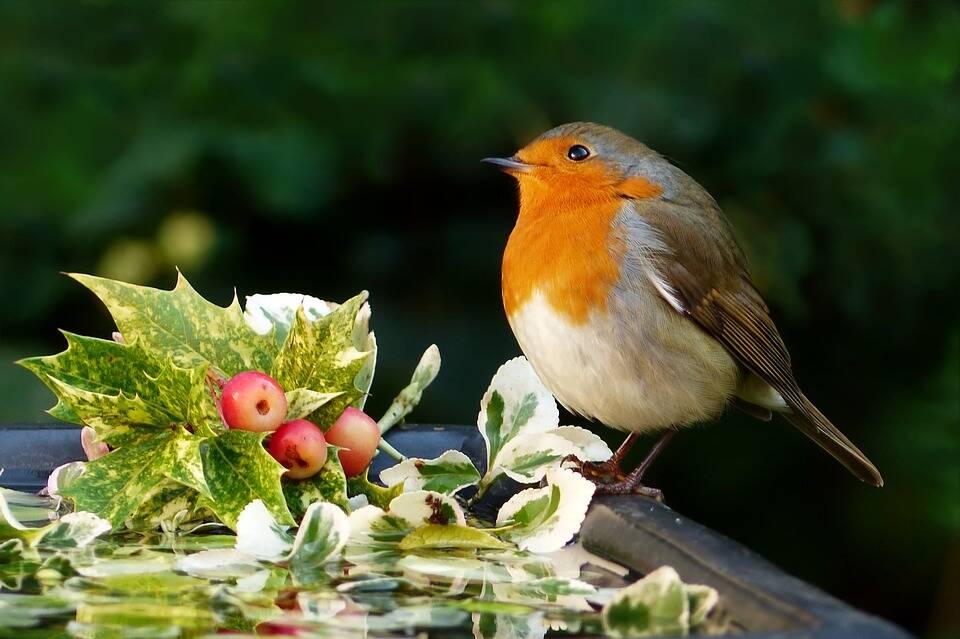 Tem uma ambiente bem arborizado vão atrair as aves naturalmente. Foto: Pixabay