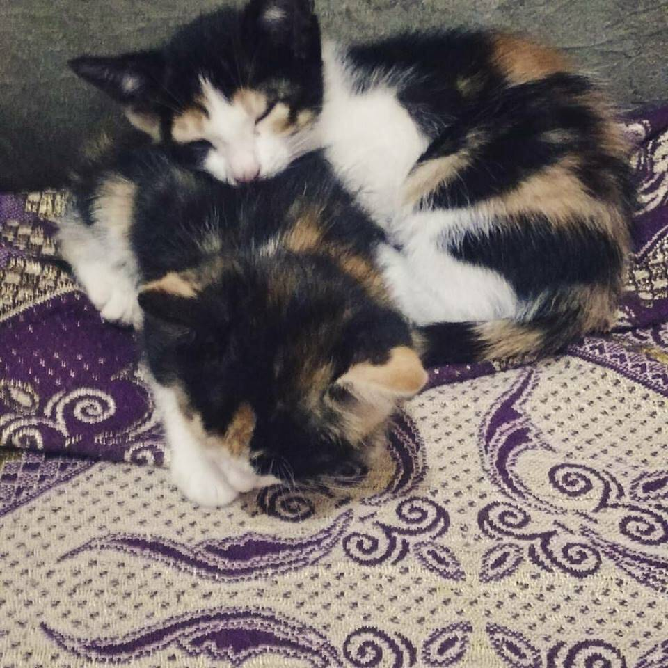 A Mia e a Ella são extremamente sapecas. Amamos!. Foto: Delta Mossa