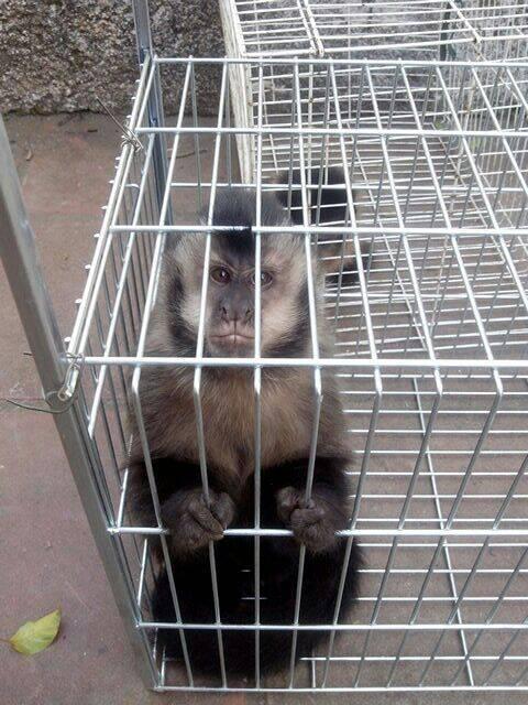 Animais estavam em cativeiro em Embu das Artes. Foto: Divulgação/Polícia Militar Ambiental