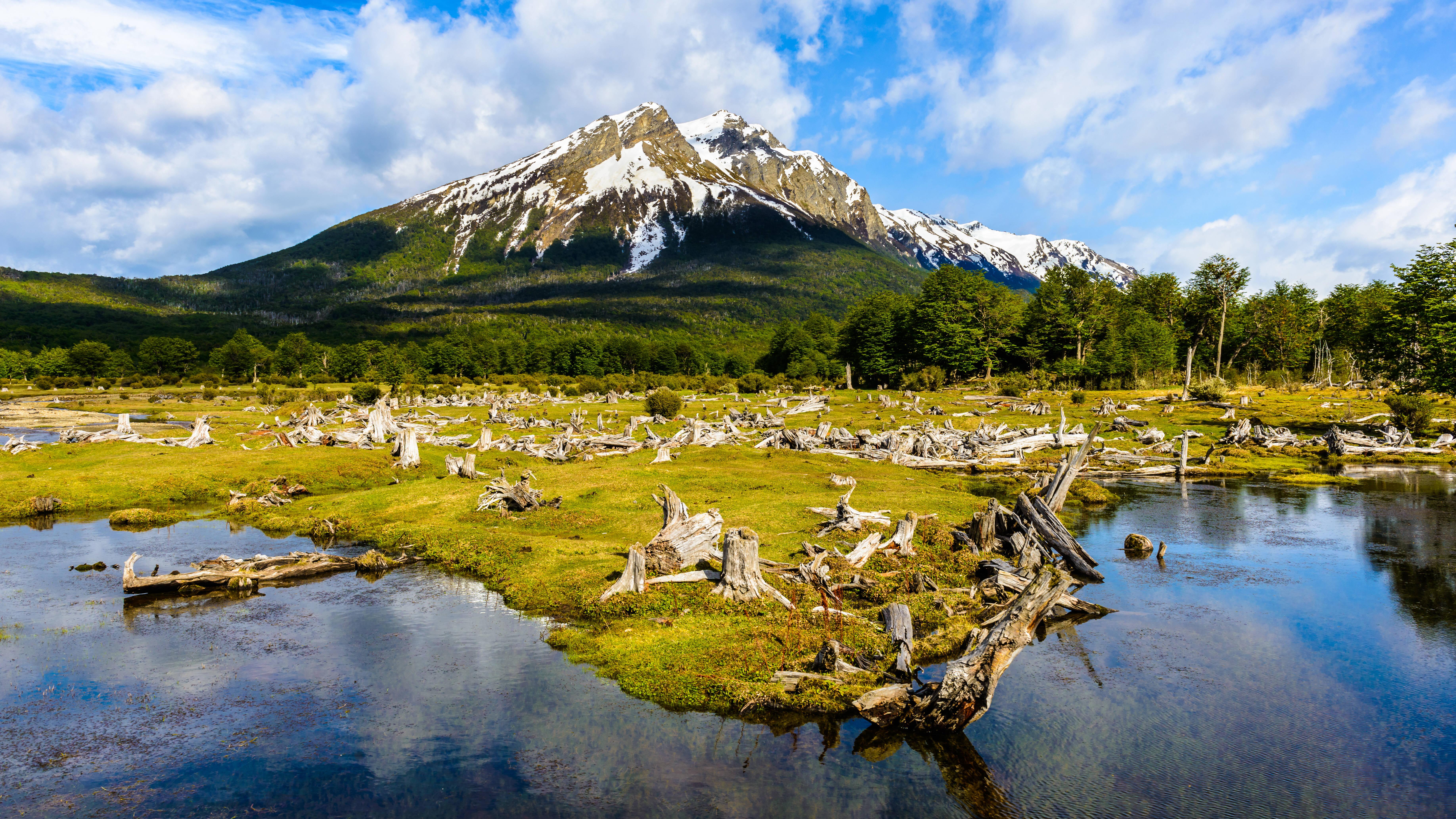 O cemitério de árvores do Parque Nacional da Terra do Fogo fica em outro trecho que só o Trem do Fim do Mundo pode acessar. Foto: shutterstock