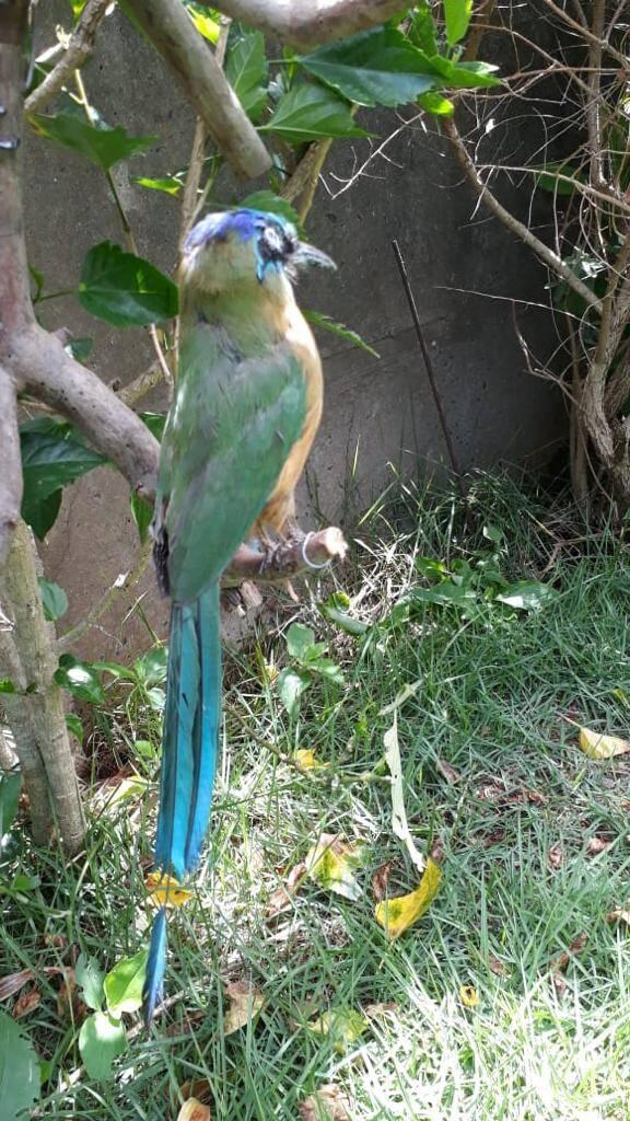 Aves que foram taxidermizadas. Foto: Reprodução/SOS Animal