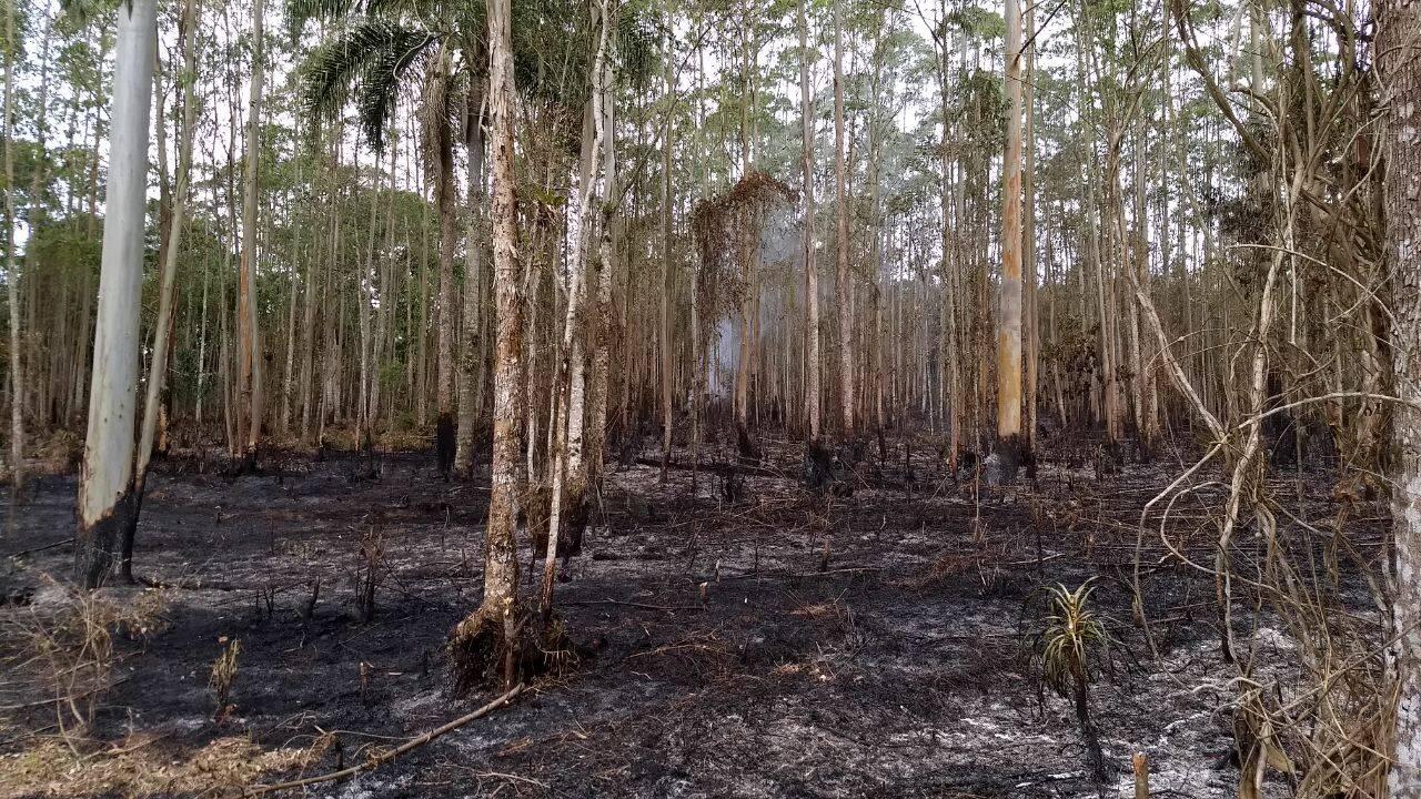 Mata onde ocorreu a queimada em Itapecirica da Serra. Foto: Divulgação/Polícia Militar Ambiental