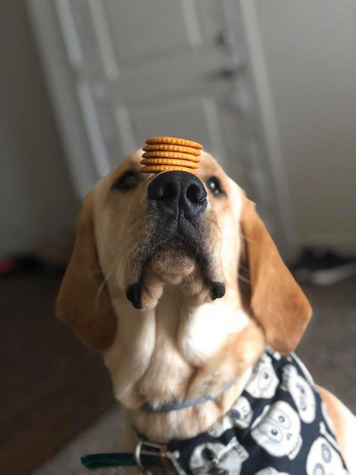 cachorro equilibrista. Foto: Facebook/ Haley Fairchild