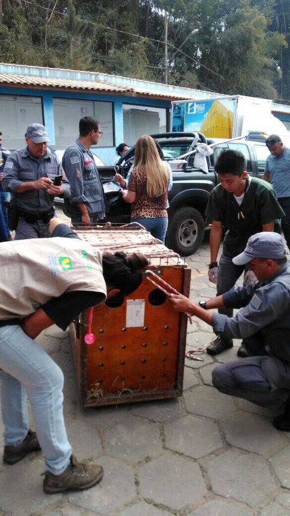 Operação para resgate da onça parda envolveu a Polícia Militar Ambiental, Bombeiros e ONG Mata Ciliar. Foto: Divulgação/Polícia Militar Ambiental