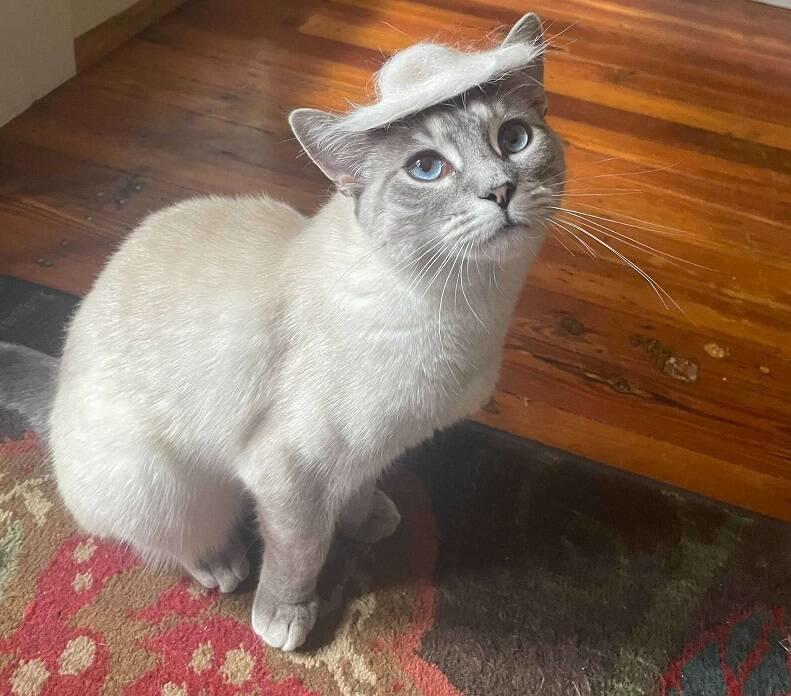 Faye se sente elegante e bonita usando o chapéu feito especialmente para ela. Foto: Taylor Nelson
