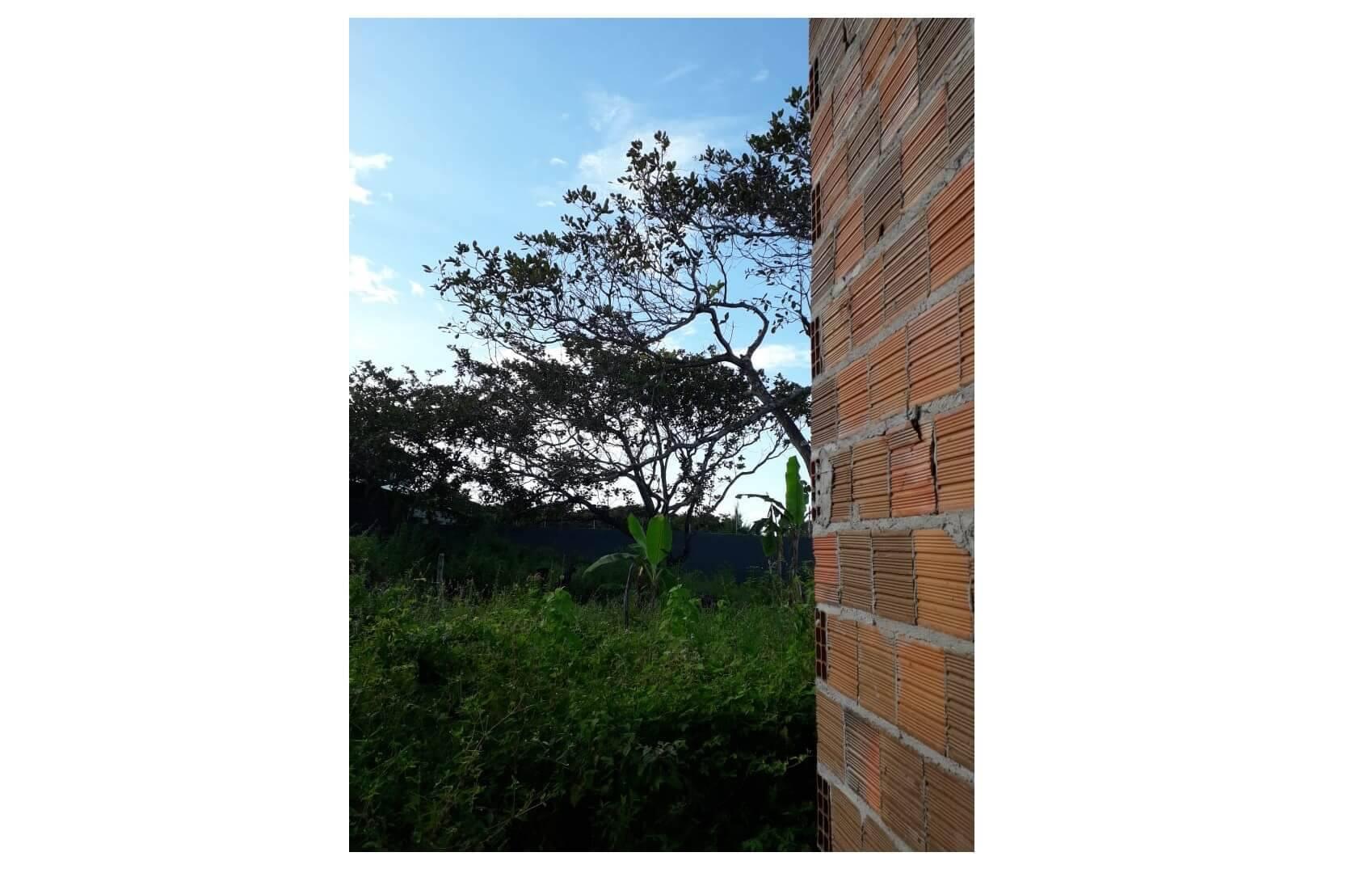 Meu fim de quintal, por Maiara Santos. Foto: Maiara Santos