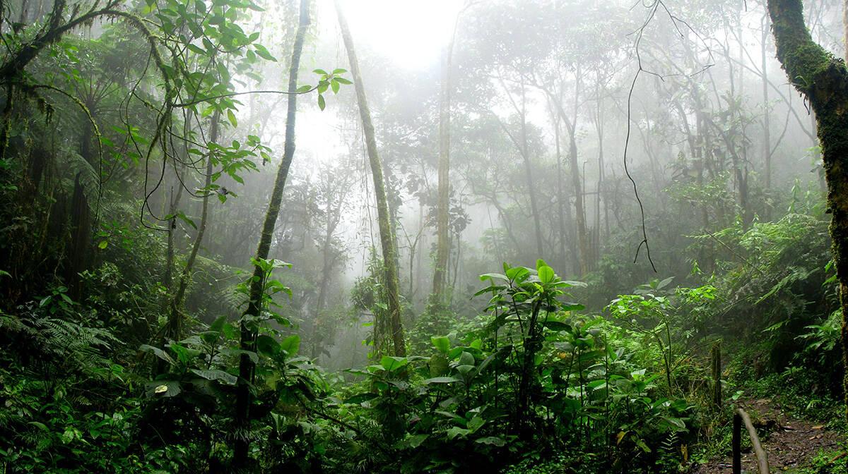 Floresta Amazônica pelo lado colombiano, na cidade de San Antonio del Tequendama. Foto: David Riaño/Pexels