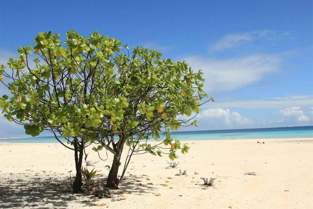Ilha de Nengo Nengo está a venda por US$ 55 milhões. Foto: Divulgação/ Private Islands Inc.