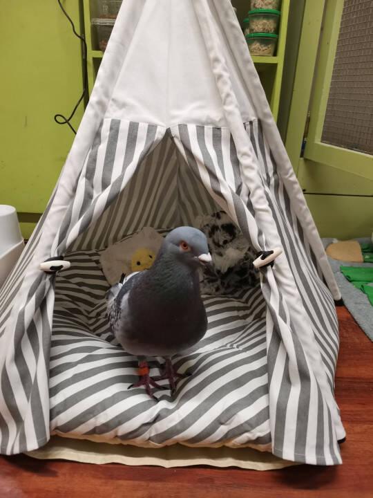 Clee em sua pequena cama. Foto: Kennedy News and Media