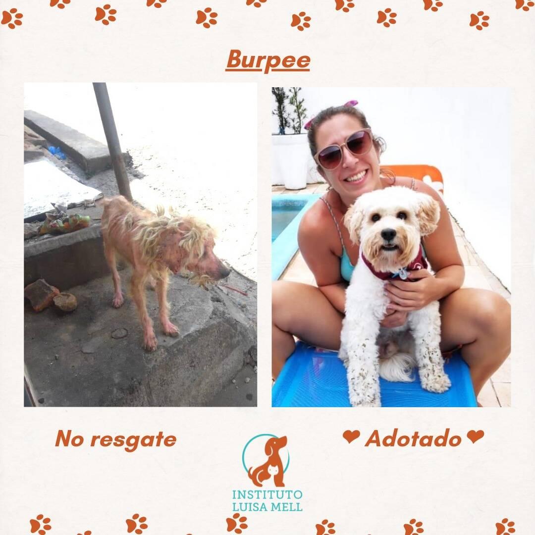 Cachorros adotados, no momento do resgate e após a adoção. Foto: Divulgação/Instituto Luisa Mell