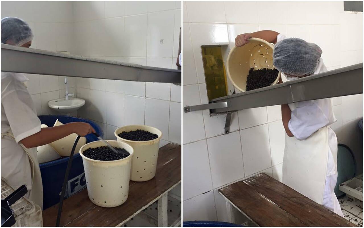 O fruto passa por uma nova lavagem e segue para o processamento. Foto: Instagram/Fazenda Bom Sossego