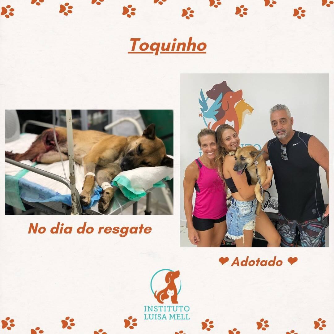 Cachorros adotados, no momento do resgate e após a adoção . Foto: Divulgação/Instituto Luisa Mell